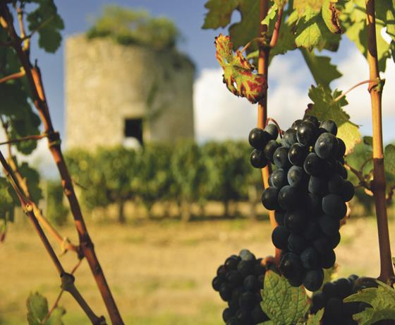 Luxury Vineyards & Wineries: No-Flying
