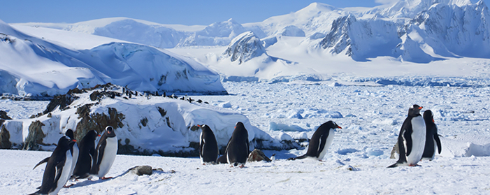 Large Group of Penguins, Antarctica